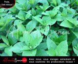 ABC_PRODUITS GreenUp Vernonia