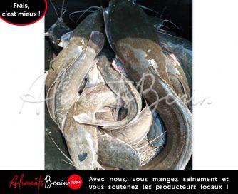 ABC_PRODUITS BENIEL_FISH Clarias